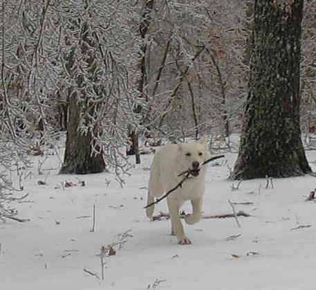 Meadow fetch after ice storm