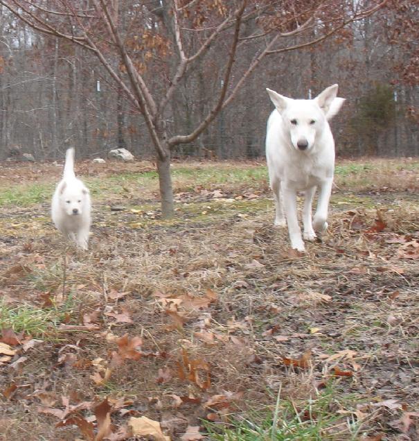 Blanca and Spirit