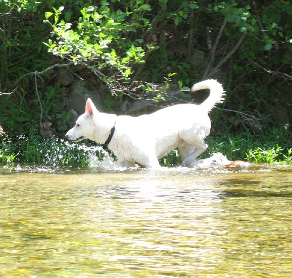 Deuce at Sinking Creek part 3
