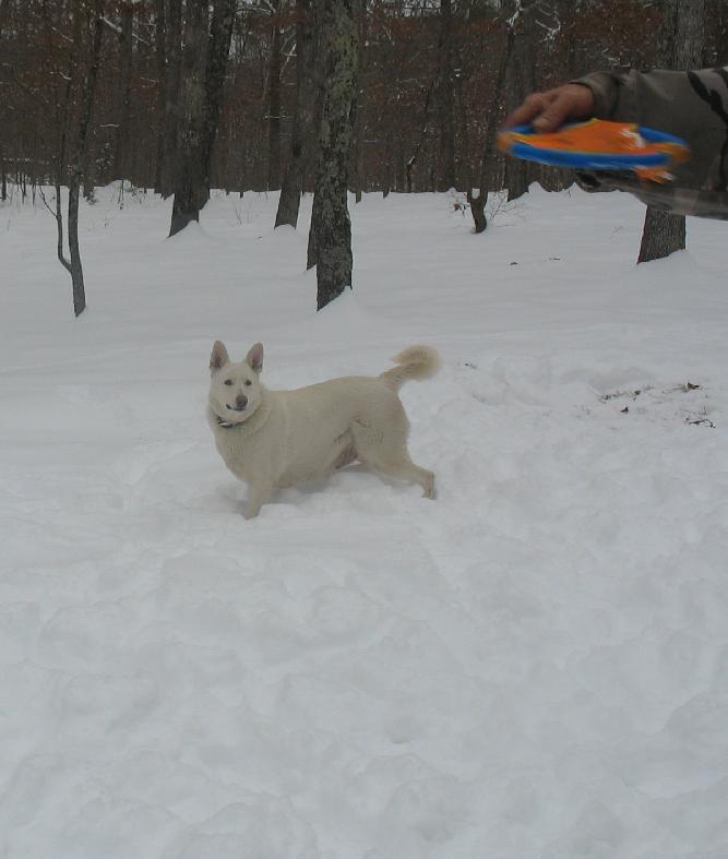 Maldasha fetch after snow