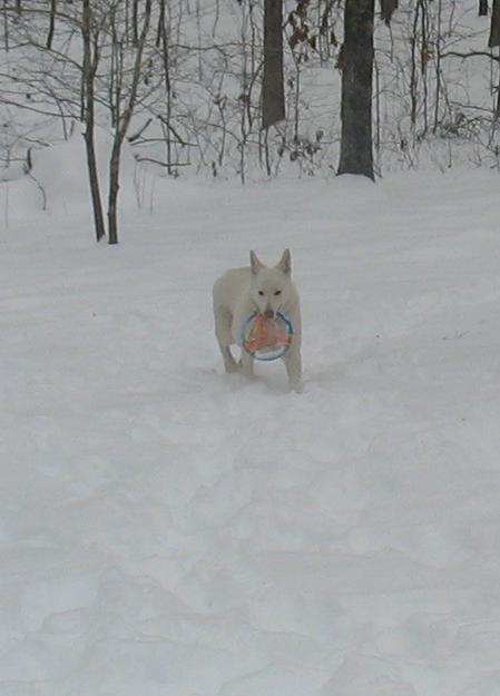 Maldasha fetch in snow part 2